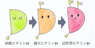 ビタミンDの活性化